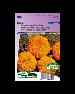 Afrikaan hoog Hawaii oranje - Sluis Garden - Zaden