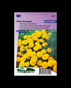 Afrikaan Petite Yellow - Sluis Garden - Zaden