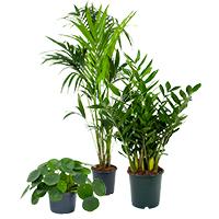 Assortiment kamerplanten en binnenplanten